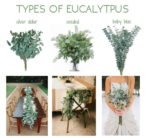 flower fact friday eucalyptus virgin farms. Black Bedroom Furniture Sets. Home Design Ideas