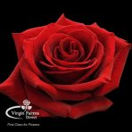 Finally Red Rose