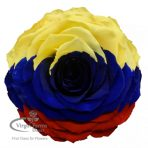Colombia Jumbo Preserved Rose