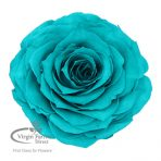 Turquoise Preserved Rose