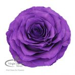 Purple Preserved Roses