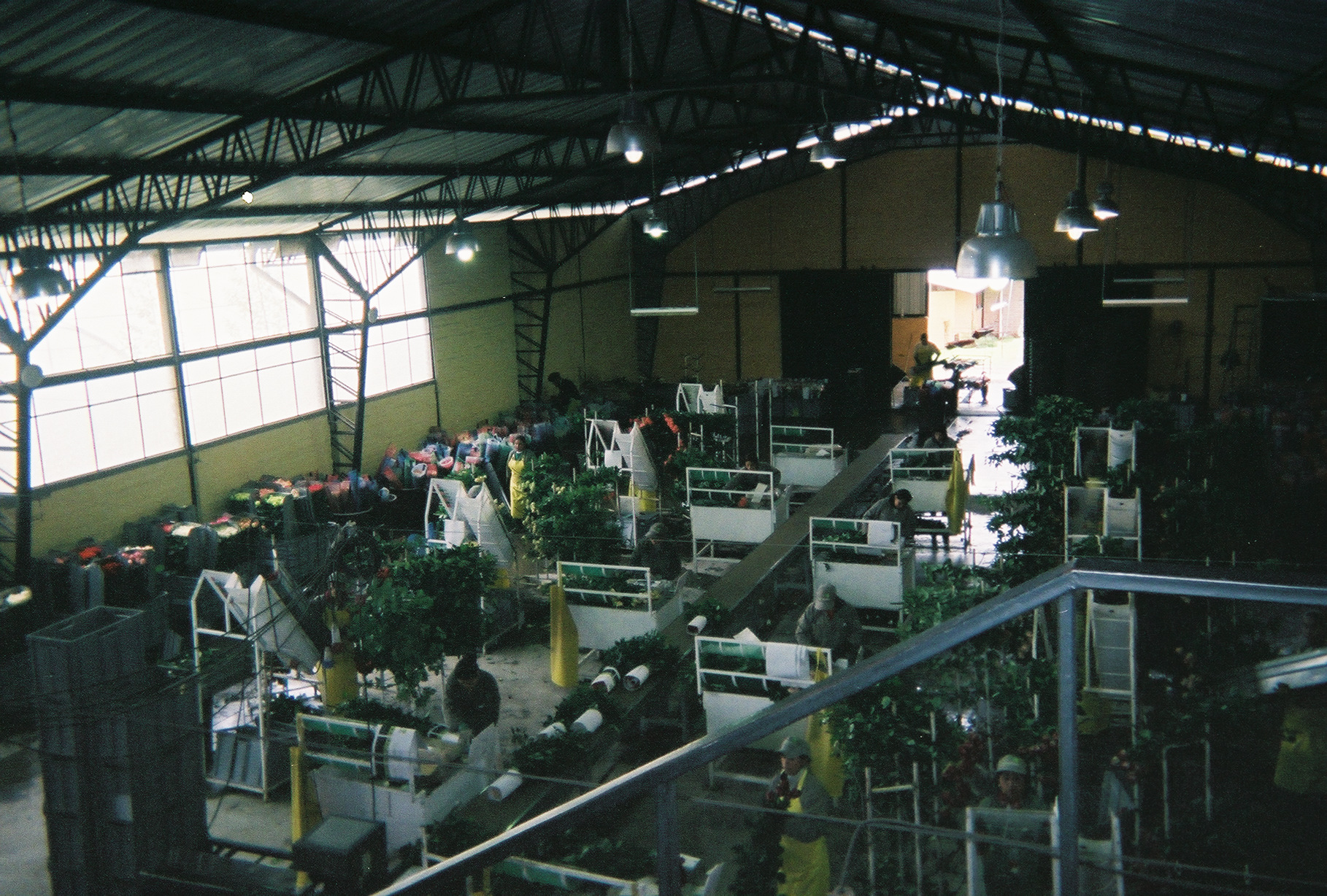 Rose Packaging Facility
