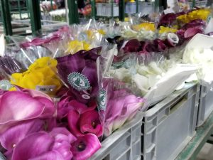 Packaged Calla Lilies