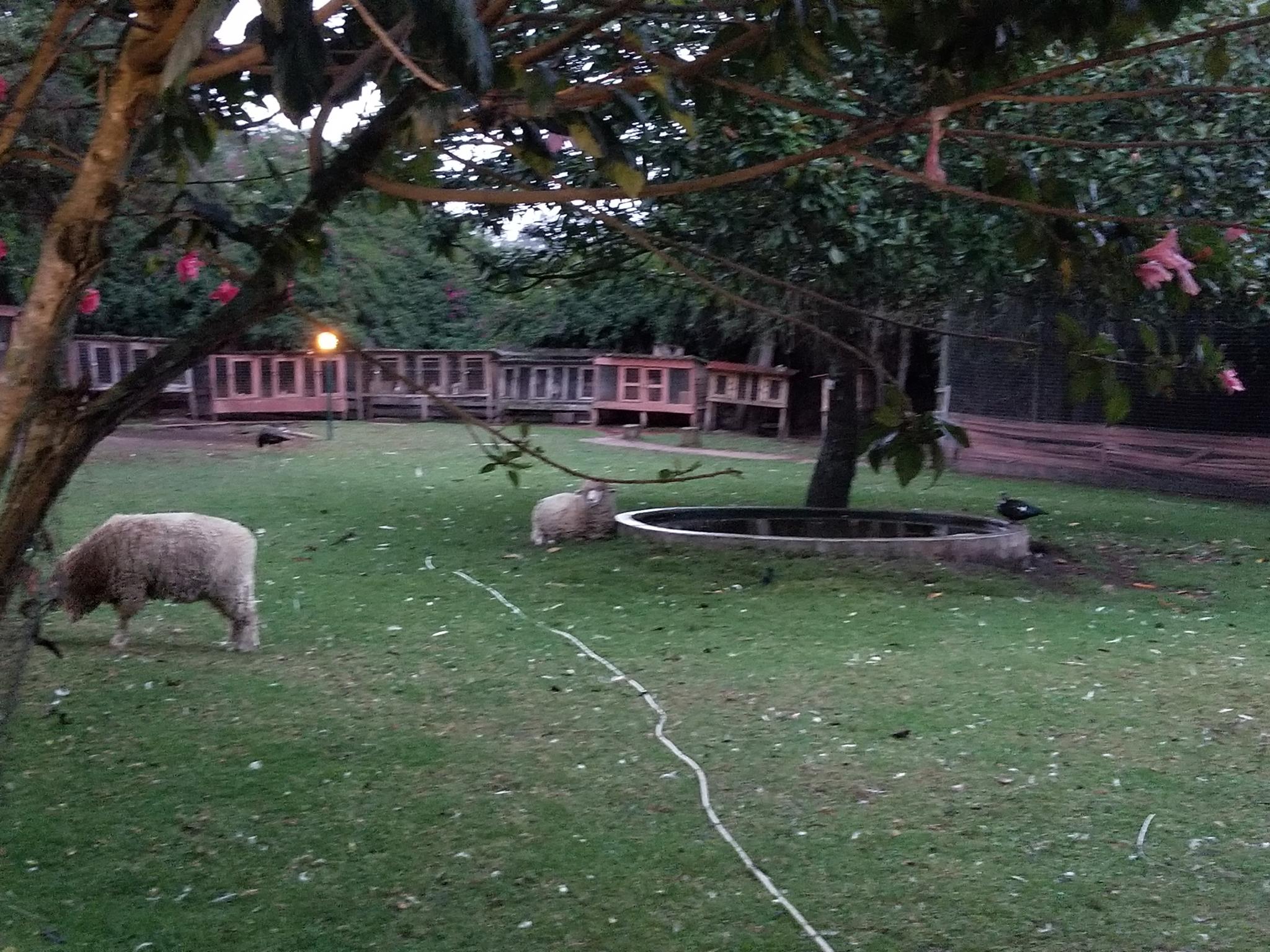Puembo Farm