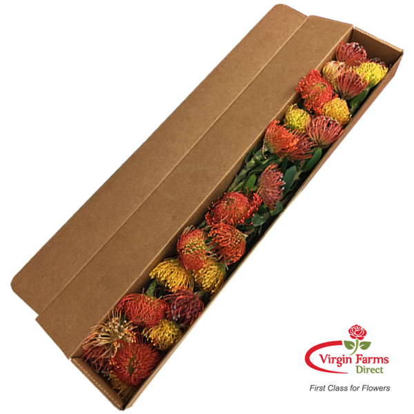 Pincushion Protea Tray-Virgin-Farms